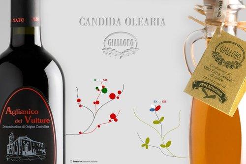 Candida Olearia